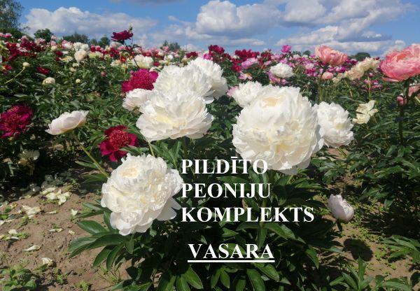 3 varieties of peonies - Carol, Sarah Bernhardt, Duchesse de Nemours on site in the nursery